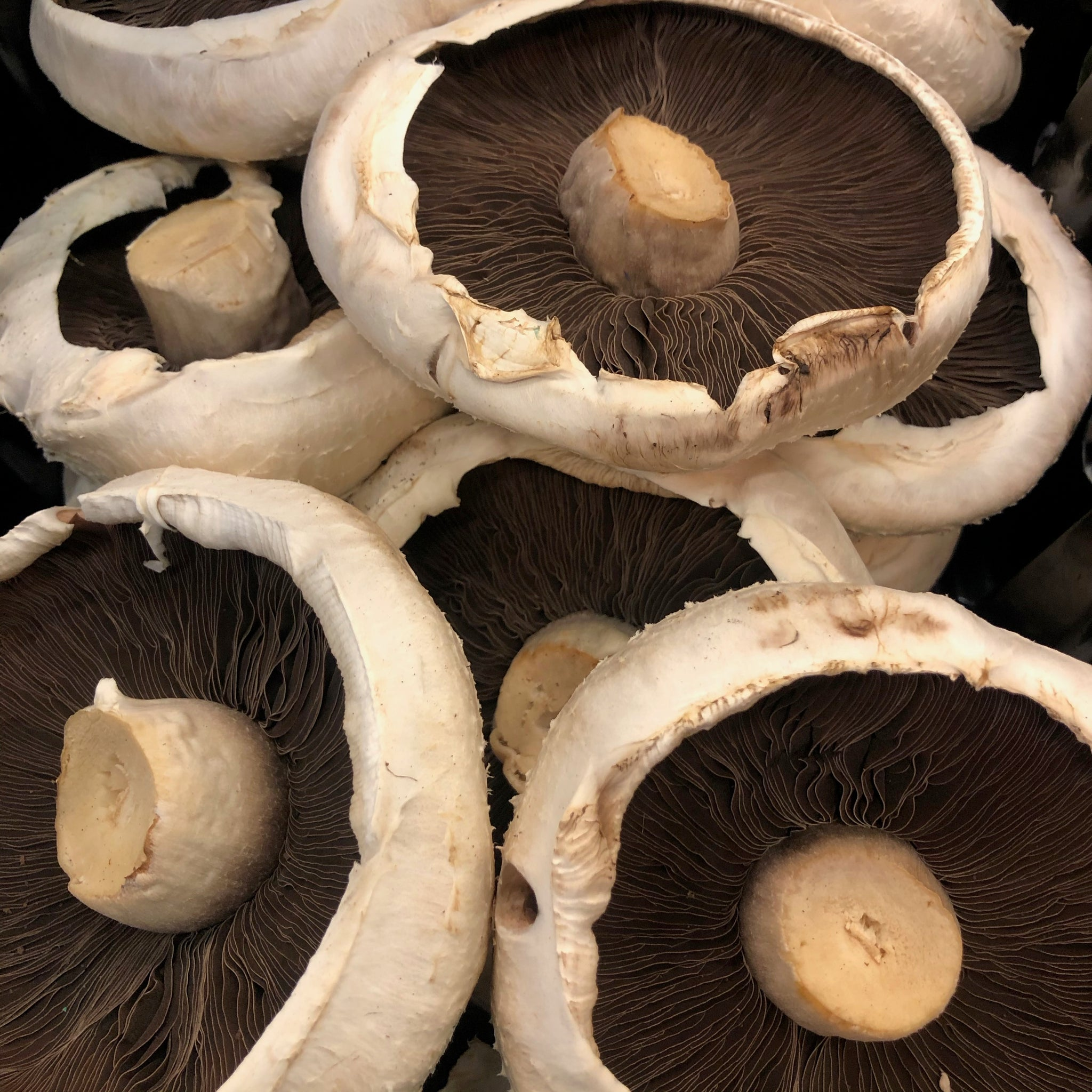 Flat mushrooms 250g - HGFD Produce