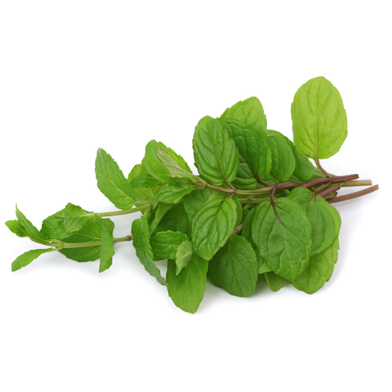 Fresh Mint - HGFD Produce