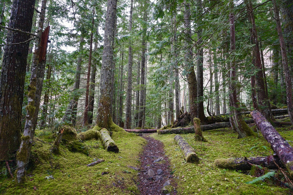 A mossy trail that has been treated well by previous user