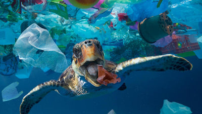 Why Is Plastic Harmful for the Ocean?