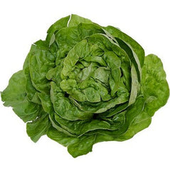 Boston Lettuce Organic