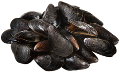 Fresh Mussels (approx. 900g)