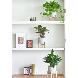 Load image into Gallery viewer, Minimalist Plant Bundle