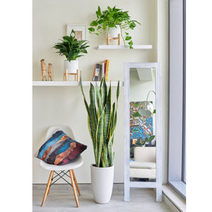 Air-Purifier Plant Bundle