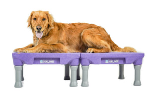 KLIMB™ Dog Training Platform