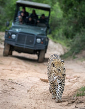 Load image into Gallery viewer, Eastern Cape Getaway - Pumba Private Game Reserve - cheap experiences in South Africa Cheap Holidays