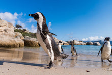 Load image into Gallery viewer, Breath Taking Simon's Town - Simon's Town Quayside Hotel - Instant Experiences
