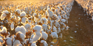 Why Choose organic cotton??