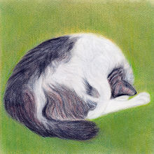 Load image into Gallery viewer, Spring Snooze - Canvas Print - Curious Cat Company