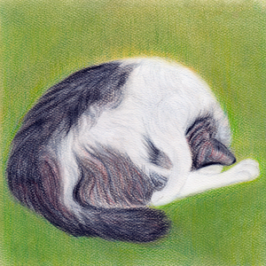 Spring Snooze - Canvas Print - Curious Cat Company