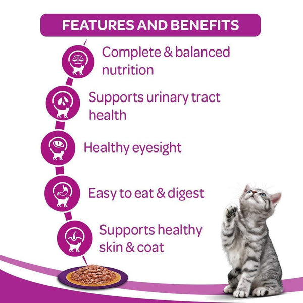Whiskas Kitten - Wet Meal Chicken in Gravy - Curious Cat Company