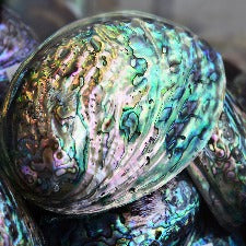 Abalone & Sea Fragrance Oil