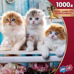 Surelox Photo Gallery Kittens 1000 Piece - Toyworld