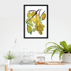 Star Fruit Watercolor Painting and Wall Art