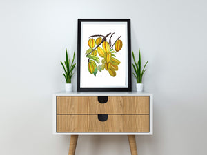 Star Fruit Art Print by sheadesignart.com