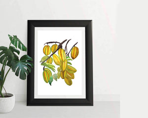 Star Fruit Art Prints