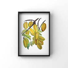 Load image into Gallery viewer, Star Fruit Art Prints