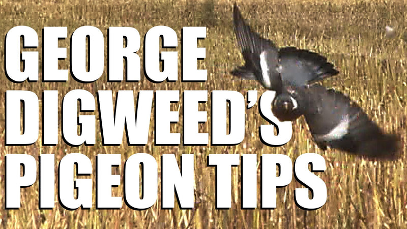 Fieldsports Britain - George Digweed's pigeon-shooting tips