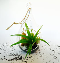 Load image into Gallery viewer, Air Plant Tear Drop Terrarium kit