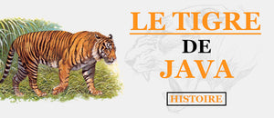 Le Tigre de Java : Un Animal Disparu