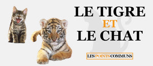 Le Tigre et le Chat : 2 Cousins pas si Differents