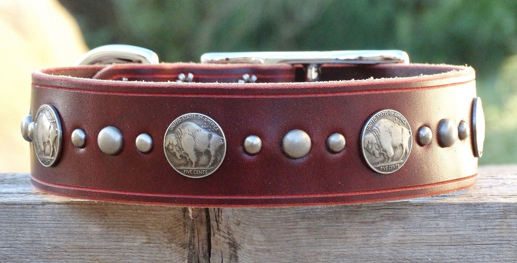 Huge Leather Dog Collar with buffalo nickel conchos
