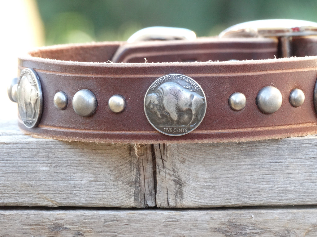 Leather Dog Collar with buffalo nickel conchos