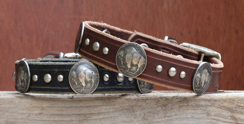 medium leather Dog Collar with buffalo nickel conchos