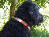 Ruff Puppies Collar on a goldendoodle