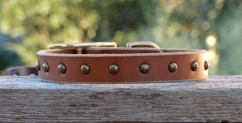 plain leather dog collars with brass or nickel studs
