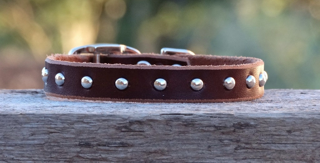leather dog collar with studs