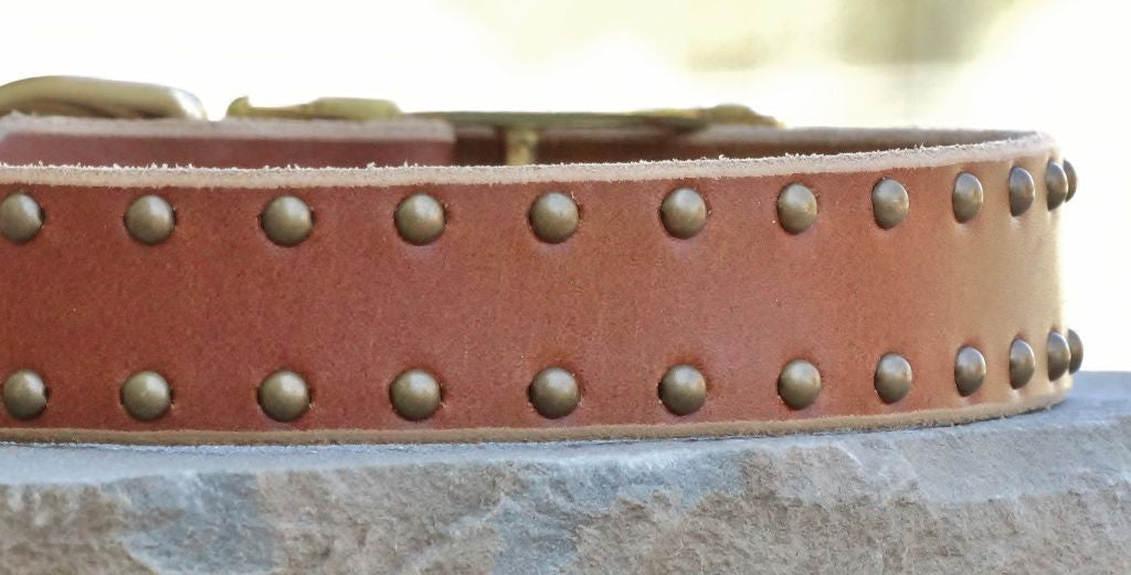 big tan classic leather dog collar with studs