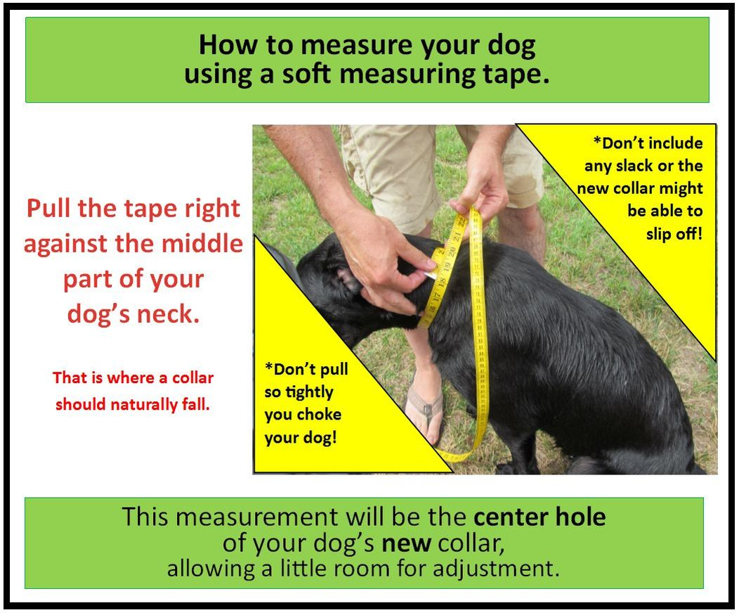 how to measure your dog collar size using soft measuring tape