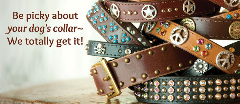 dog collars for all sizes