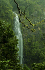 Load image into Gallery viewer, Lush rainforests at Moran Falls