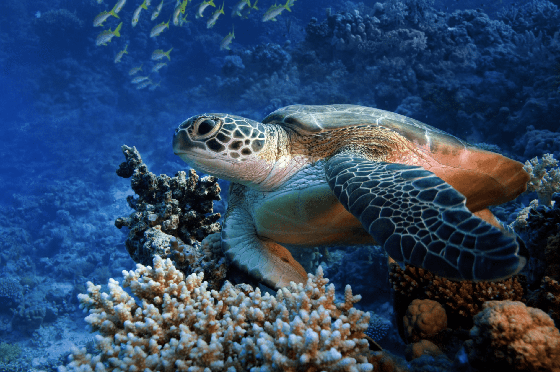 Sea Turtle by Willyam Bradberry