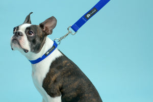 Dog Leash Royal Blue and Silver - Poshtails