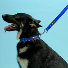 Load image into Gallery viewer, Dog Collar Royal Blue and Silver - Poshtails