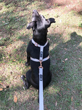Load image into Gallery viewer, Blue and Silver Dual Strap Dog Harness - Poshtails