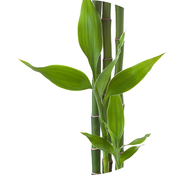 Ingredient Bamboo