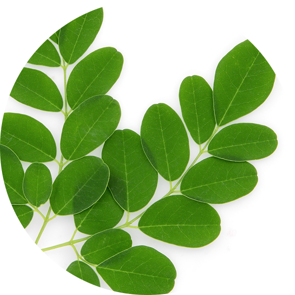 Ingredient Moringa