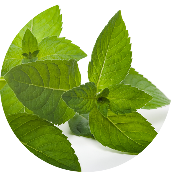 Ingredient Peppermint Oil