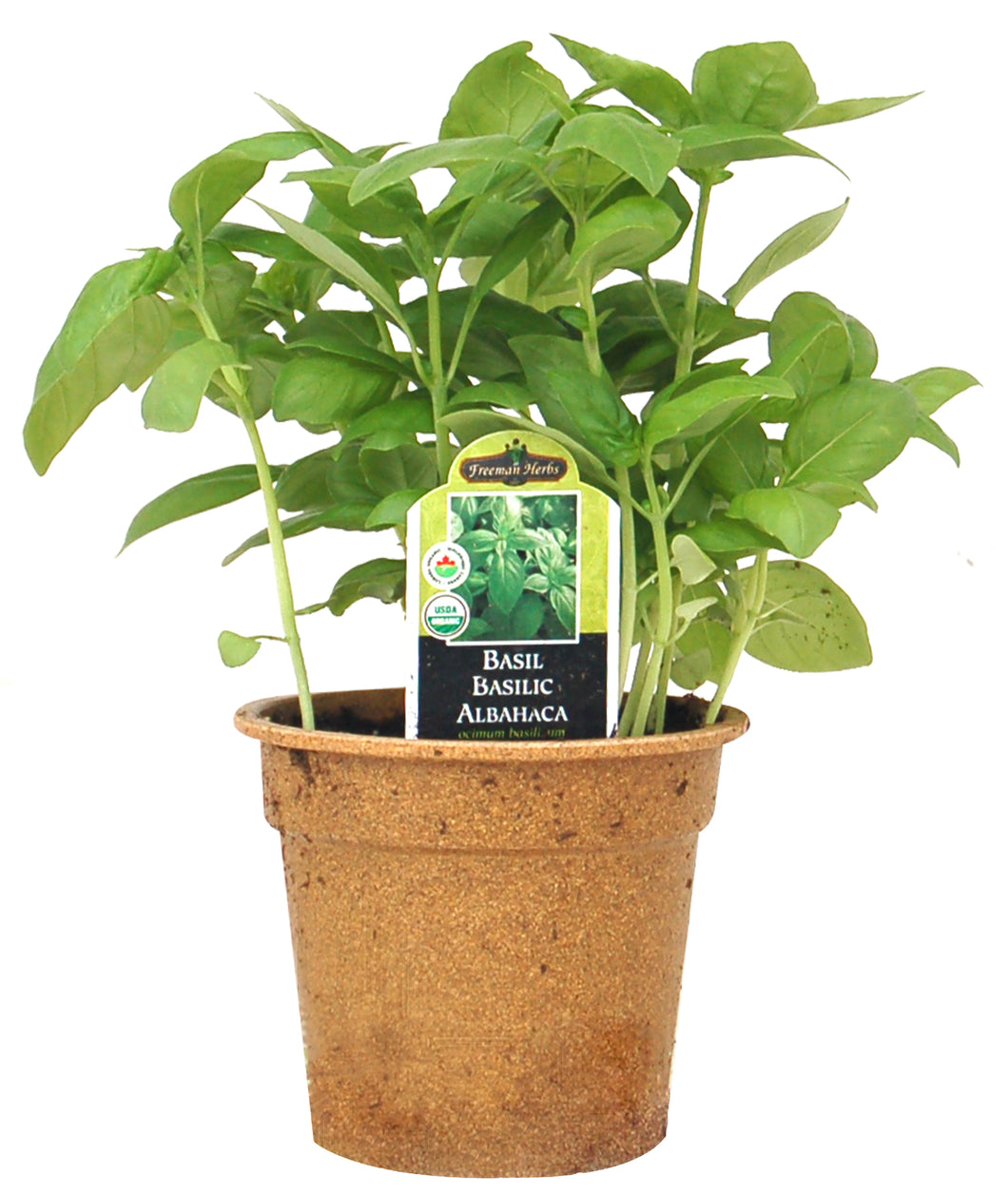 Basil - Genovese (Lettuce Leaf) AVAILABLE IN STORE ONLY