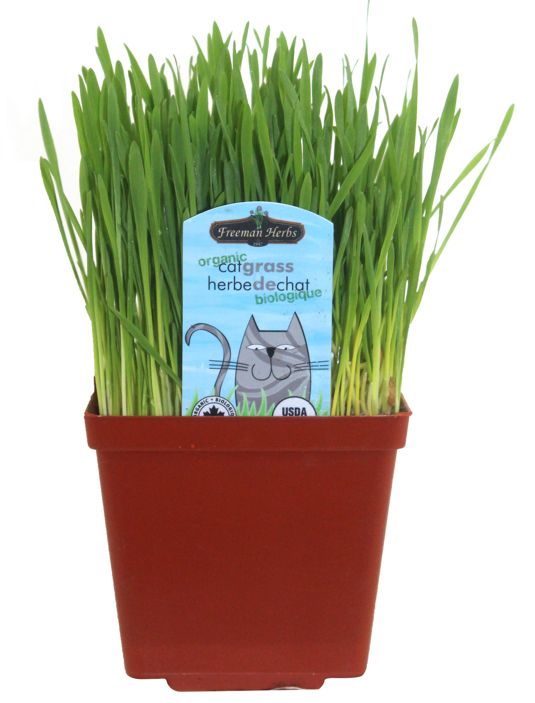 Cat Grass AVAILABLE IN STORE ONLY
