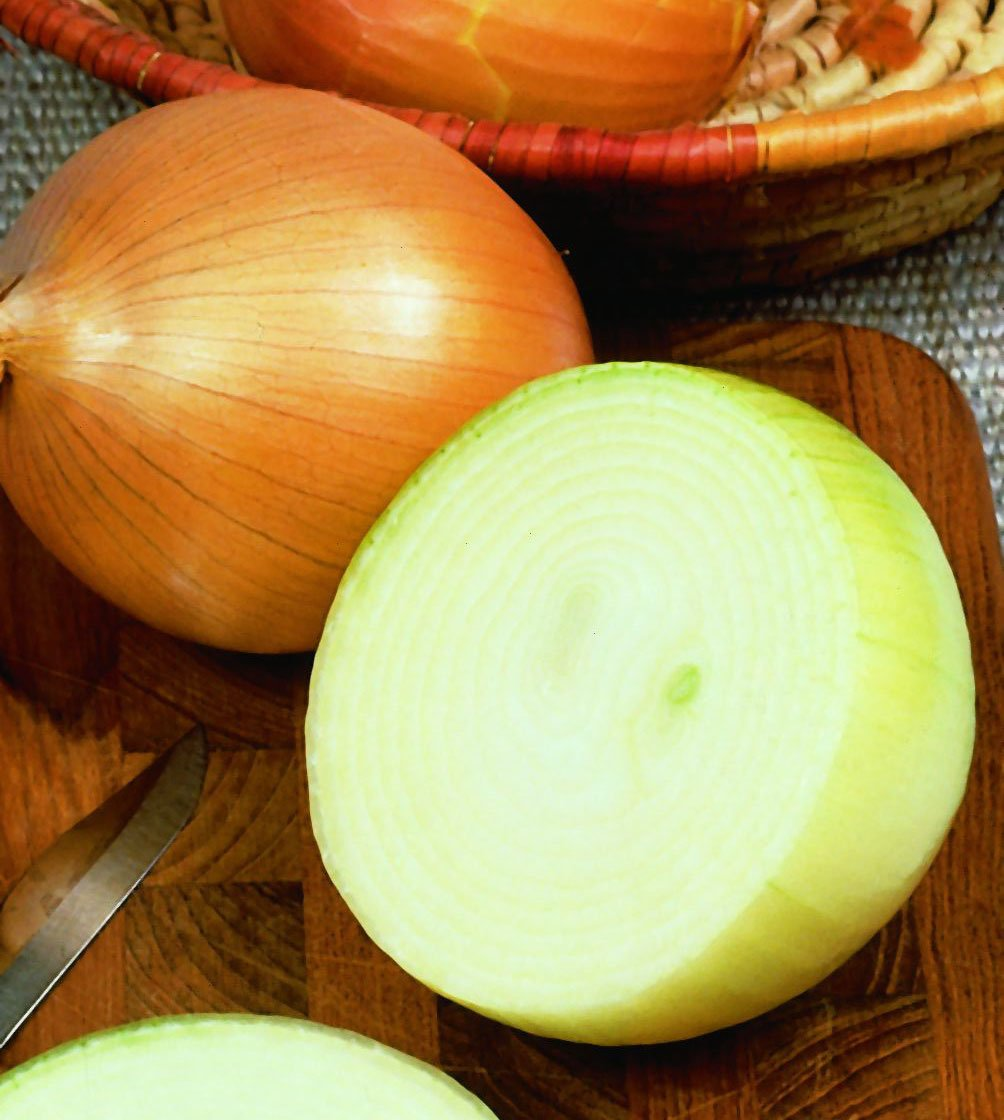 Giant Spanish Onion 4pk Seedling Plant ONLY AVAILABLE IN STORE