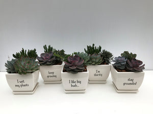 Succulents in Whimsicle Pots