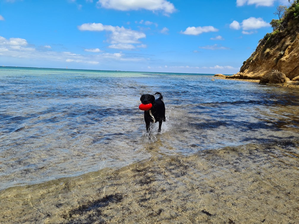 Our favourite Australian beaches for your furry friends!