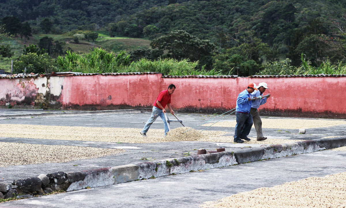 Tres Rios Coffee Estate, San Jose, Panama