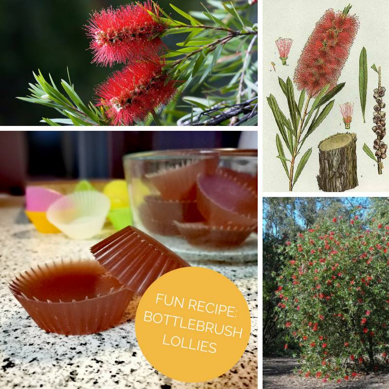 BOTTLEBRUSH LOLLIES