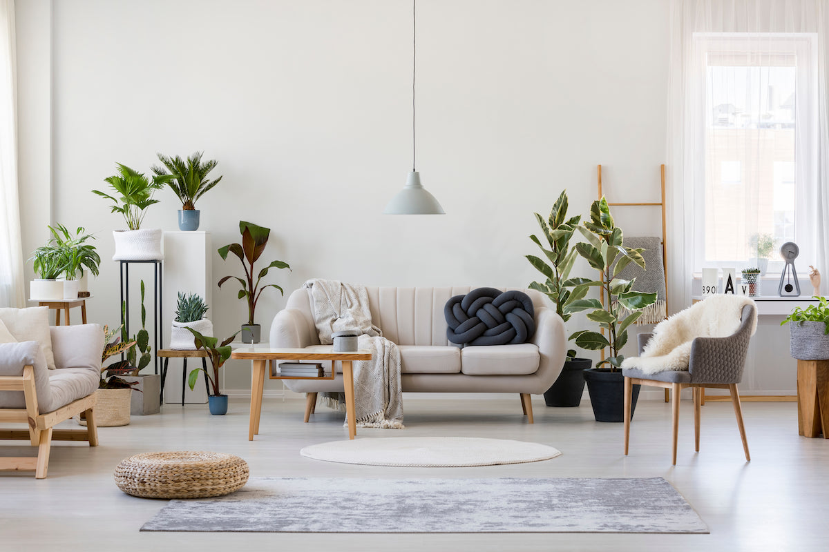 aesthetic living room with complete installed furniture